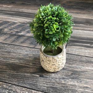 Mini plant!
